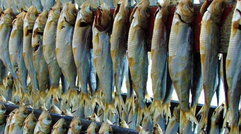 Pesce essiccato di Montisola